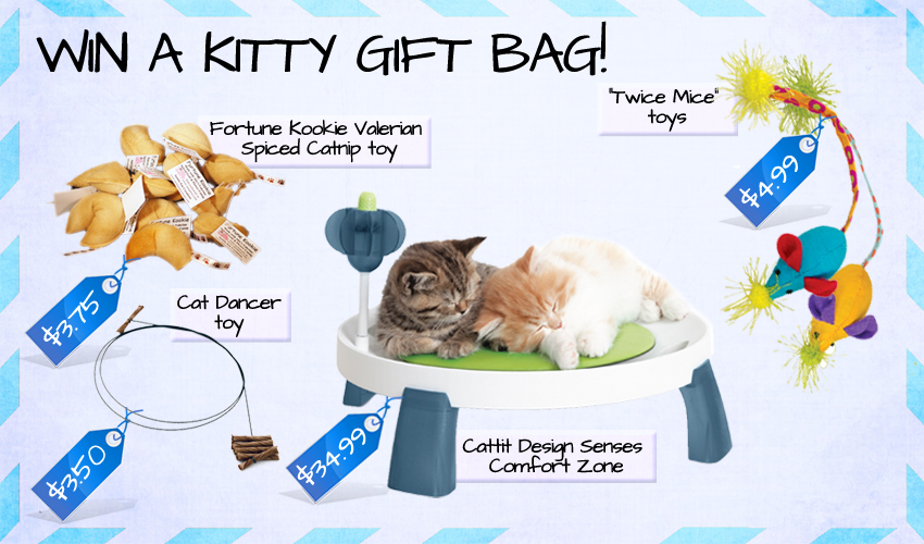 Win A Kitty Gift Bag!