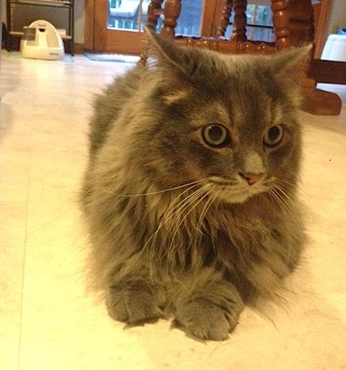 Cat Scratch with Jasper
